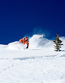 USA, Utah, young woman skiing Lee's Tree in the powder, Alta Ski Resort
