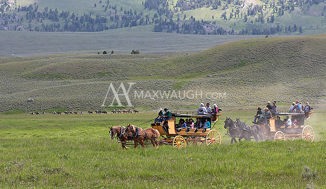Tourists ride stagecoaches to the Old West Cookout.