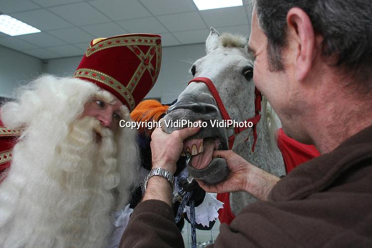 Foto: VidiPhoto..RHENEN - Onder toeziend oog van Sinterklaas, kreeg de witte schimmel van de Goedheiligman, Amerigo, vrijdag een APK-keuring van de dierenarts van Ouwehands Dierenpark in Rhenen. Zo werden de hoeven, de knieën en het gebit van het paard gecontroleerd. De controle is nodig omdat Amerigo de komende tijd samen met Sint op pad moet om pakjes te bezorgen in het land..