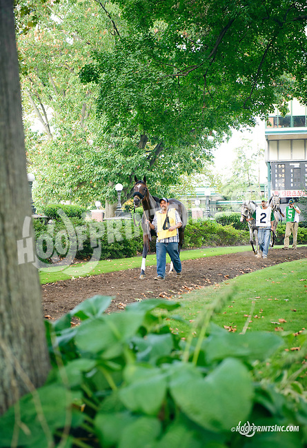DC Willeys Song before The Buzz Brauninger Arabian Distaff Handicap (grade 1) at Delaware Park on 9/5/15