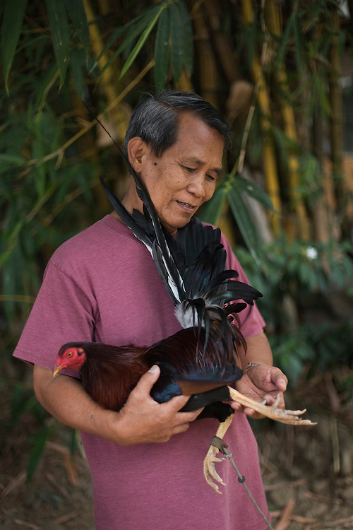 A man checks the feet of his favorite fighting cock in Manila, Philippines.
