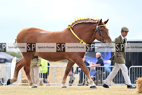 Orsett. United Kingdom. 07 September 2019. Heavy horse ring. Orsett Horticultural and agricultural show. Essex. UK.~ 07/09/2019.  MANDATORY Credit Garry Bowden/Sport in Pictures - NO UNAUTHORISED USE - 07837 394578