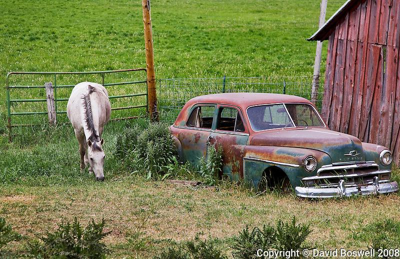 A horse grazing next to a junked Plymouth near Durango, Colorado.