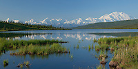 Mt. McKinley and the Alaska Range reflecting on a calm summer morning at Wonder Lake, Denali National Park, Alaska.