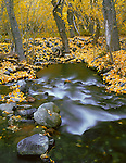 Inyo National Forest, CA<br /> Fall colored cottonwoods line the rushing flow of McGee Creek in the Eastern Sierras