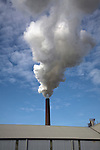 Steam smoke rising from chimney of sugar beet factory, Bury St Edmunds, Suffolk, England