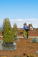 A tourist looks at endangered silversword plants in bloom, which are indigenous only to Haleakala on the island of Maui.
