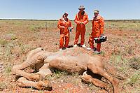 Inside Natures Giants-CAMEL