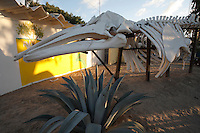 pr7040-D. Gray Whale (Eschrichtius robustus) skeleton. San Carlos, Baja, Mexico..Photo Copyright © Brandon Cole. All rights reserved worldwide.  www.brandoncole.com..This photo is NOT free. It is NOT in the public domain. This photo is a Copyrighted Work, registered with the US Copyright Office. .Rights to reproduction of photograph granted only upon payment in full of agreed upon licensing fee. Any use of this photo prior to such payment is an infringement of copyright and punishable by fines up to  $150,000 USD...Brandon Cole.MARINE PHOTOGRAPHY.http://www.brandoncole.com.email: brandoncole@msn.com.4917 N. Boeing Rd..Spokane Valley, WA  99206  USA.tel: 509-535-3489