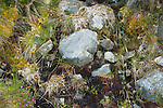 Rocks and vegetation the side of Invervar Burn, Glen Lyon, Perthshire, Highlands of Scotland, UK