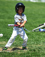 PNLL T-Ball Hot Rods action 2015. (Photo by AGP Photography)