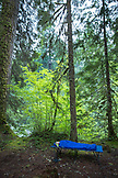 USA, Oregon, Santiam River, Brown Cannon, a young boy sleeping on a cot in a campground near the Santiam River in the Willamete National Forest