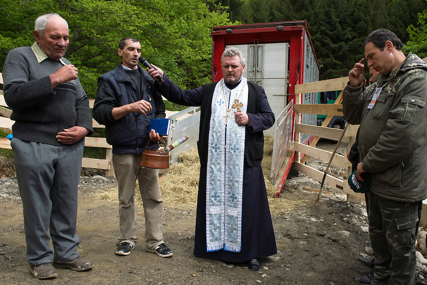 The Armenis village priest, who held a sermon for the bison at the release site and splahed them with Holy water, at the release of European bison, Bison bonasus, in the Tarcu mountains nature reserve, Natura 2000 area, Southern Carpathians, Romania. The release was actioned by Rewilding Europe and WWF Romania in May 2014.