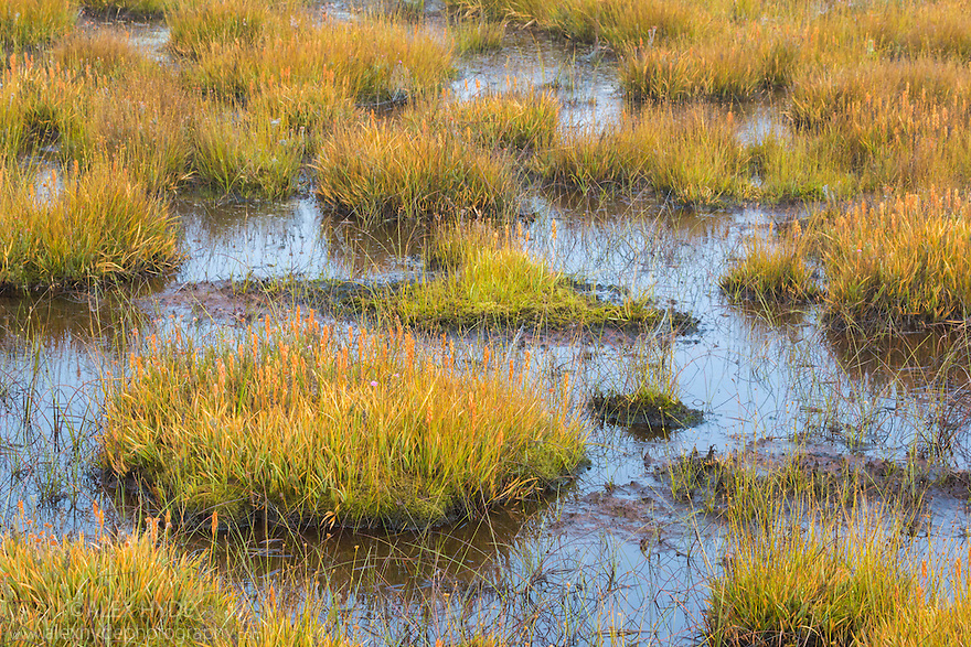Heathland pool, Thursley Common National Nature Reserve, Surrey, UK. October.
