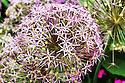 Duke Gardens Flora