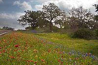 Multi-Colored field of Bluebonnets, Indian Blanket, Primrose, Coreopsis, Black-eyed Susan bloom along Highway 29 near Llano, Texas
