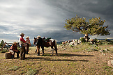 USA, Wyoming, Encampment, wrangelrs on a mountain top wait for trail riders near a dramatic tree, Abara Ranch