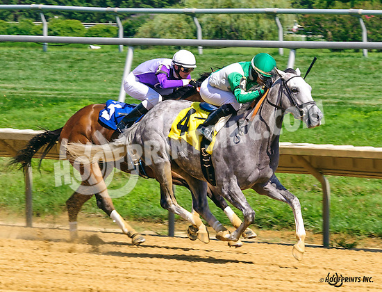 On Tap winning at Delaware Park on 8/3/16