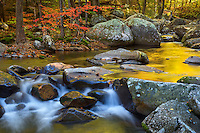 The spectrum of fall color and golden morning light reflected on a small cascade in the Greenbrier section of the Smoky Mountains.