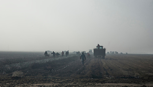 Farm workers tend to the fields in the San Joaquin Valley of California