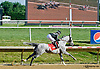 Valiant Boy SBFAR winning The Valour Farms Arabian Stake (gr 2) at Delaware Park on 7/6/13 - setting a NEW TRACK RECORD 1 1/16 Miles = 1:54.4