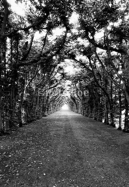 A tree lined path.