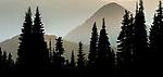 Evergreen forest, Mount Rainier National Park, Washington, USA