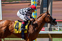 DEL MAR, CA  AUGUST 4:  #4 Tap the Wire, ridden by Drayden Van Dyke, makes it look easy winning the Graduation Stakes on August 4, 2018 at Del Mar Thoroughbred Club in Del Mar, CA. (Photo by Casey Phillips/Eclipse Sportswire/ Getty Images)