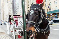 New York, NY - 31 March 2016 - Black carriage horse on Central Park South awaits customers. ©Stacy Walsh Rosenstock