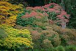 Seattle, Washington:<br /> Fall colored trees in Kubota Gardens city park