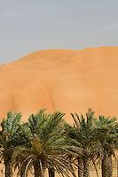United Arab Emirates, Abu Dhabi, Sand dunes and palms at desert oasis