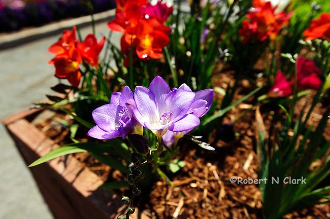 Flower close-ups
