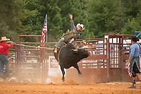 SEBRA - Chesterfield, VA - 8.30.2015 - Bulls & Action