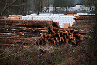 Timber at Seattle Snohomish Mill Company, Snohomish, Washington, US