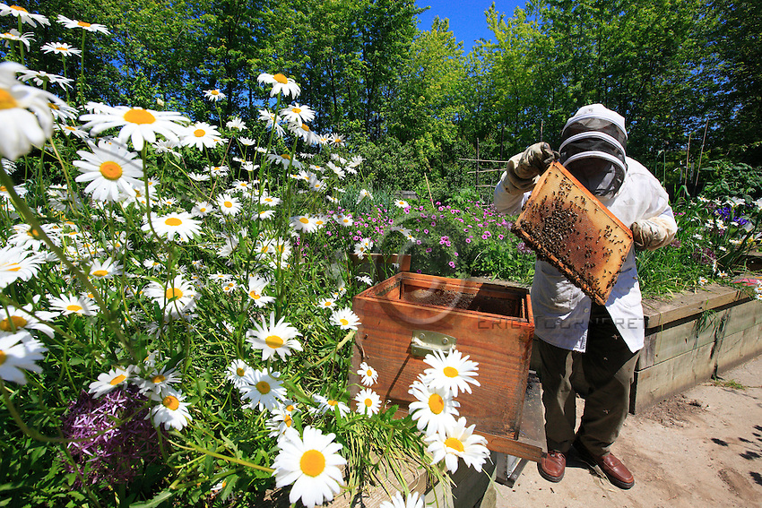 """Jean Paucton in the Parc de la Villette puts a swarm of bees into hives to populate his apiary. """"In the Villette, I give classes on raising bees to children and adults. This quick introduction to beekeeping is much sought after because everyone wants to know more about bees. For me, urban apiculture allows us to denounce everything that is dumped into the fields, the insecticides like Cruiser, the herbicides..."""""""