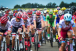 The peloton including Green Jersey Marcel Kittel (GER) and Dan Martin (IRL) Quick-Step Floors during Stage 11 of the 104th edition of the Tour de France 2017, running 203.5km from Eymet to Pau, France. 12th July 2017.<br /> Picture: ASO/Pauline Ballet | Cyclefile<br /> <br /> <br /> All photos usage must carry mandatory copyright credit (&copy; Cyclefile | ASO/Pauline Ballet)