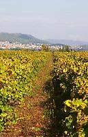 vineyard domaine pelaquie rhone france