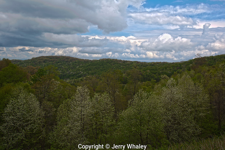 Spring Foliage, Cherohala Skyway