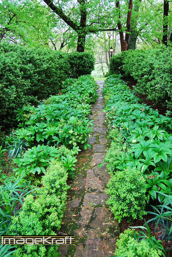 Rustic path with foliage leading to trees and lamp post at plantation in Charlottesville, Virginia