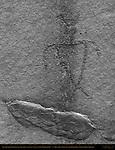 Anasazi Shaman Figure (inversion), Eye of the Sun Petroglyph Wall, Monument Valley Navajo Tribal Park, Navajo Nation Reservation, Utah/Arizona Border