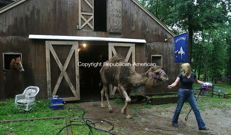 OXFORD, CT -29 June 2004- 062905BZ01- Beth Brooks, of Oxford, brings her camel &quot;Wilma&quot;  out of the barn at her Oxford home as her horse &quot;Comet&quot;, left, looks on Wednesday afternoon.<br /> Jamison C. Bazinet photo