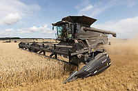 Harvesting Winter wheat in Rutland<br /> ©Tim Scrivener Photographer 07850 303986<br />      ....Covering Agriculture In The UK....