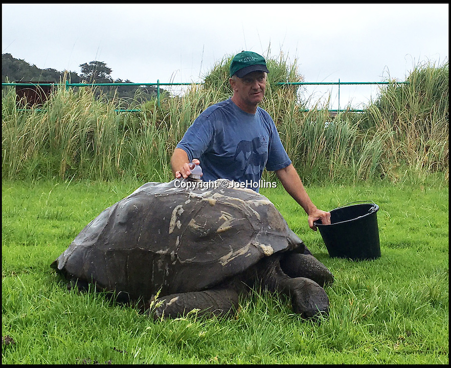 BNPS.co.uk (01202 558833)<br /> Pic: JoeHollins/BNPS<br /> <br /> Island vet Joe Hollins gives Jonathan the tortoise a much needed clean.<br /> <br /> The world's oldest living animal is starting over with a clean sheet at 184 years old - after a vet gave him his first ever bath. <br /> <br /> Jonathan the giant tortoise has come out of his shell after centuries of grime were carefully scrubbed off his back with a loofah, soft brush, and surgical soap.<br /> <br /> The famous reptile was over the moon with his make over and is now ready for a VIP visit to his historic island home.