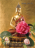 Helga, STILL LIFES, photos, buddha, camellia(DTTH43172,#I#)