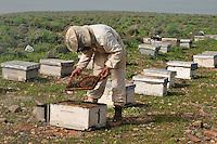 Beekiper controlling  his Beehive