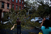 New York, New York<br /> September 16, 2010<br /> <br /> Park Slope after a severe storm and possible tornado. A tree falls on 5th Street and 6th Avenue.