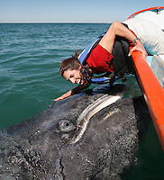 pr7125-D. Gray Whale (Eschrichtius robustus), playful calf interacts with happy tourist (model released). San Ignacio Lagoon, Baja, Mexico. .Photo Copyright © Brandon Cole. All rights reserved worldwide.  www.brandoncole.com..This photo is NOT free. It is NOT in the public domain. This photo is a Copyrighted Work, registered with the US Copyright Office. .Rights to reproduction of photograph granted only upon payment in full of agreed upon licensing fee. Any use of this photo prior to such payment is an infringement of copyright and punishable by fines up to  $150,000 USD...Brandon Cole.MARINE PHOTOGRAPHY.http://www.brandoncole.com.email: brandoncole@msn.com.4917 N. Boeing Rd..Spokane Valley, WA  99206  USA.tel: 509-535-3489
