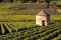 Stone shelter and Burgundy wine vineyard near Savigny les Beaune, Burgundy, France