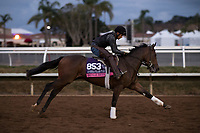 DEL MAR, CA - NOVEMBER 02: Fatale Bere, owned by Leonard Powell, Gerald Benowitz & Mark C. Mathieson and trained by Leonard Powell, exercises in preparation for Breeders' Cup Juvenile Fillies Turf at Del Mar Thoroughbred Club on November 2, 2017 in Del Mar, California. (Photo by Scott Serio/Eclipse Sportswire/Breeders Cup)