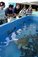 Visitors stop to view the rescued Loggerhead Turtles, Caretta caretta, on display at the Mote Marine Lab Aquarium in Sarasota, Florida. No MR
